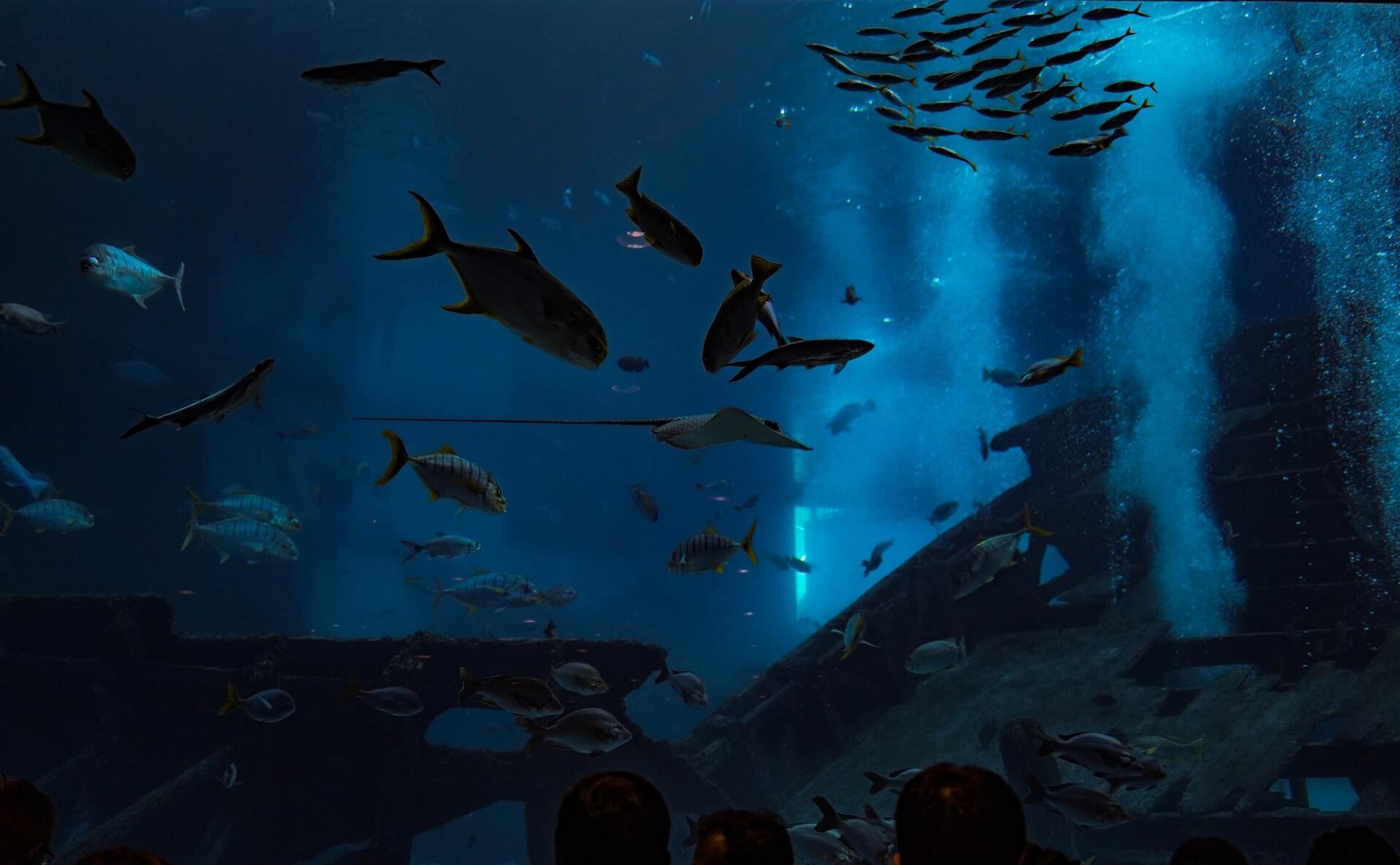 Aquarium SIbenik - Taxi Sibenik